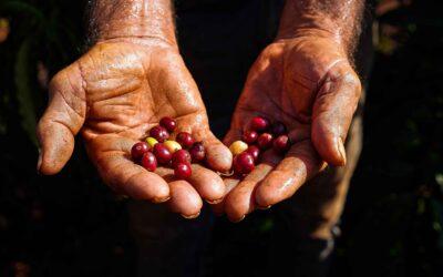 Agro Familiar: Mãos que alimentam.