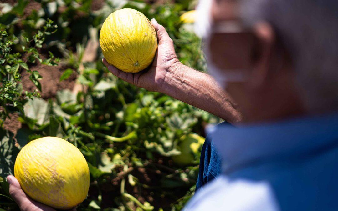 A Importância da Agricultura Familiar na Economia de Mato Grosso.